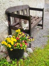 Mačka odpočíva na lavičke vonku