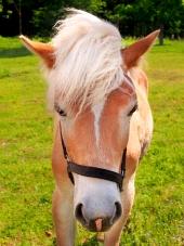 Mladý kôň na zelenej lúke