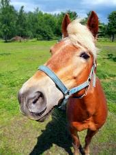 Kôň sa pozerá priamo do fotoaparátu