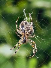 Pohľad z blízka na pavúka ako tká svoju sieť