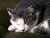Portrét spiacej mačky