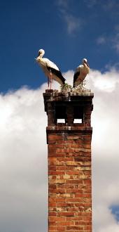 Dva bociany biele na komíne