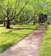 Park a starý strom