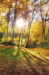 Slnko žiariace pomedzi koruny stromov