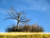 Osamotený vyschnutý strom