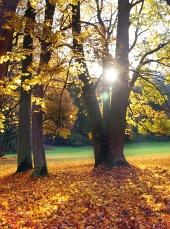 Lúče slnka vykukujú spoza stromov