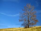 Osamotený strom na lúke