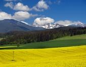 Žltá lúka a kopce na Liptove