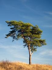 Osamotený strom a modrá obloha