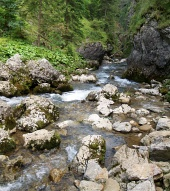 Horský potôčik Borovianka v Prosieckej doline