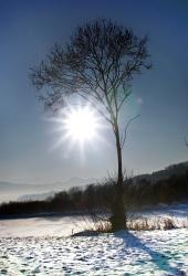 Strom a slnko