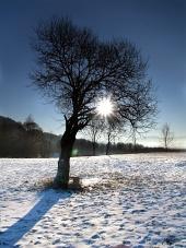Strom a slnko počas zimy