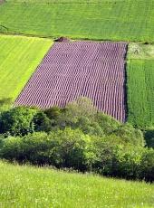 Zelená lúka a pole