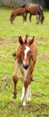 Mladý koník beží po zelenej lúke