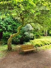 Lavička pod pokrúteným stromom v Turčianskej Štiavničke
