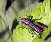 Farebný hmyz na liste