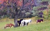 Kone sa pasú pod stromom sfarbeným jesennými farbami