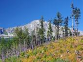 Zničený les vo Vysokých Tatrách