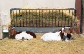 Kozy v ohrade