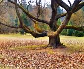 Masívny strom v parku