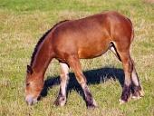 Mladé kone sa pasú na lúke