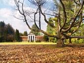 Prastarý strom v botanickej záhrade s arborétom