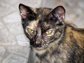 Portrét strakatej zatúlanej mačky