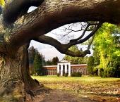 Masívny strom v starej botanickej záhrade
