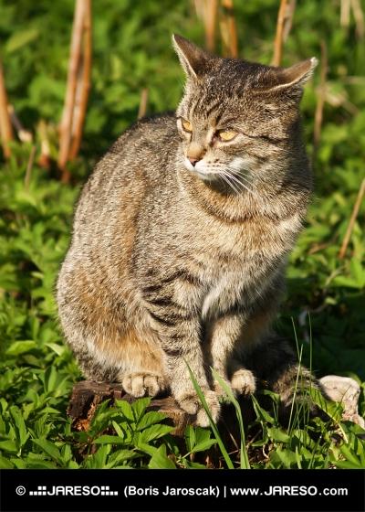 Mačka sedí na pni v tráve