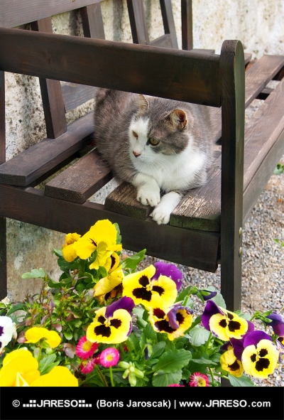 Mačka odpočíva na drevenej lavici