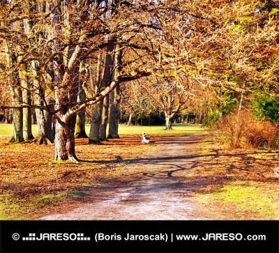 Pestrofarebný jesenný park