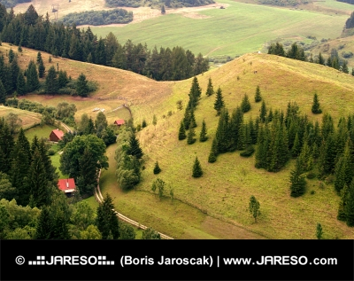Osamotené domčeky v lese