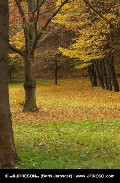 Jesenný park pri kúpeľných domoch v obci Lúčky