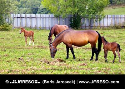 Kone sa pasú na oplotenej lúke