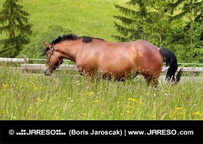 Kôň na lúke vo vysokej tráve