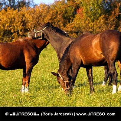 Tri kone na zelenej lúke