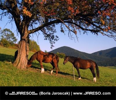 Kone oddychujú pod stromom