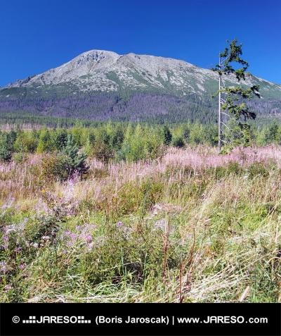 Víchricou zničené lesy vo Vysokých Tatrách