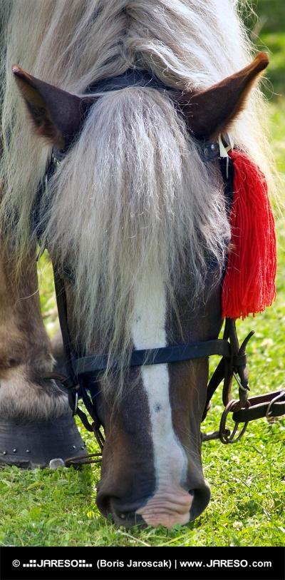 Kôň s červenou ružicou