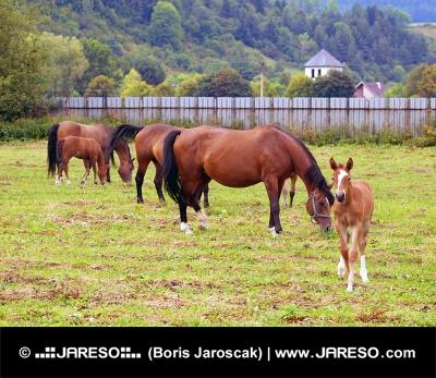 Veľa koní pasúcich sa vo výbehu