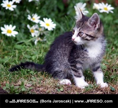 Mačiatko na zelenej lúke