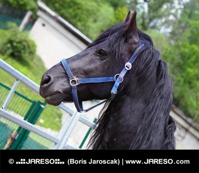 Portrét čierneho koňa zobrazujúci hlavu s uzdou