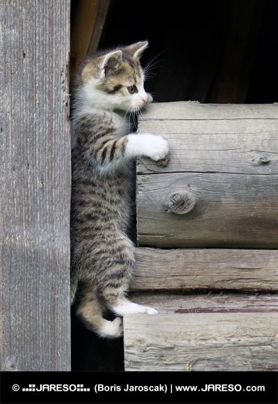 Mačiatko sa šplhá po dreve