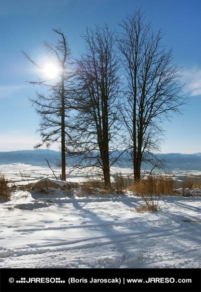 Stromy a slnko vo Vysokých Tatrách