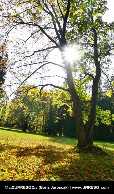 Slnko schované v korune stromov