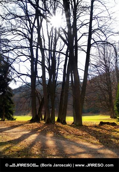 Slnko v korune stromov v parku počas jesenného dňa
