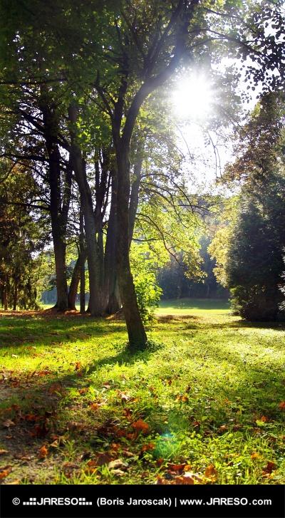 Slnko presvitá cez koruny stromov