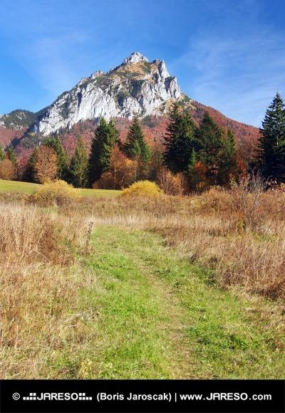Turistická cesta smerujúca ku Veľkému Rozsutcu na Slovensku
