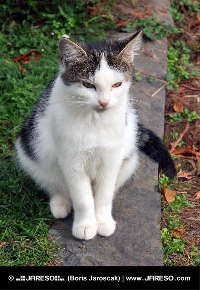 Roztomilá mačka sedí na obrubníku