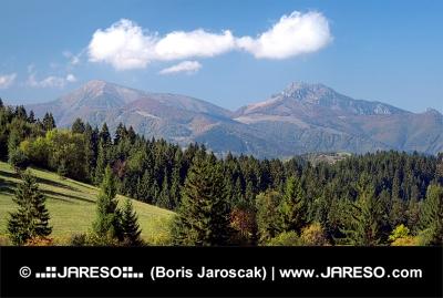 Les nad obcou Jasenová a Malá Fatra v diaľke